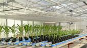 PlantScreen 模块化系统
